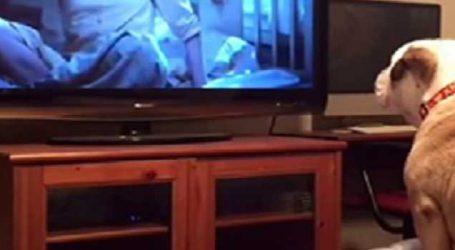બંધ રૂમમાં આવી ફિલ્મો જોવાનો શોખીન છે આ શ્વાન, જુઓ VIDEO