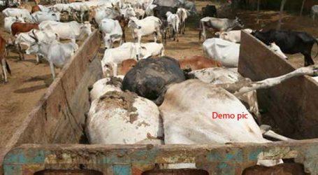 અમદાવાદ : કોટ વિસ્તારમાં મસ્જિદનો મિનારો તૂટતા છ ગાયોના મોત