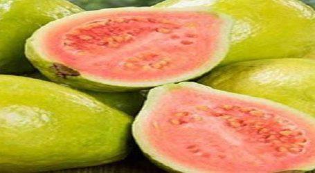 સ્વસ્થ રહેવું હોય તો શિયાળામાં ખાઓ આ એક ફળ, મળશે અઢળક ફાયદા