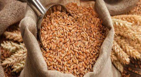 સસ્તા ઘઉંની લાલચ ના રાખતા, જલદી ઘરમાં ભરી લેજો : ખેતી કરનાર ખેડૂતોને થશે બખ્ખાં