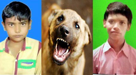 હડકાયા કૂતરાએ બે બાળકોનો ભોગ લીધો : ડિસાના ઢૂવામાં ગ્રામજનોમાં ફફડાટ