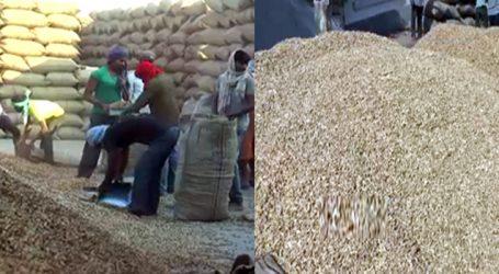 સૌરાષ્ટ્રભરમાં મગફળીના ખરીદ કેન્દ્રો બંધ : ખેડૂતોમાં સરકાર સામે આક્રોશ