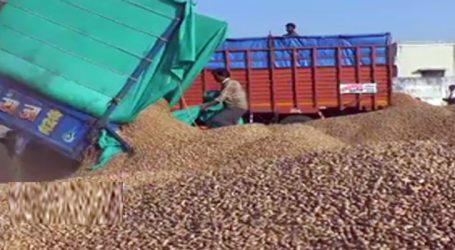 મગફળીના ખેડૂતોને પૈસા ચૂકવવામાં રૂપાણી સરકાર હાંફી ગઈ, 626 કરોડ રૂપિયાની ખરીદી
