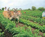 નાના ખેડૂતો માટે મોદી સરકારની મોટી યોજનાઓ, ચૂંટણી પહેલાં વરસશે રાહતોનો ધોધ