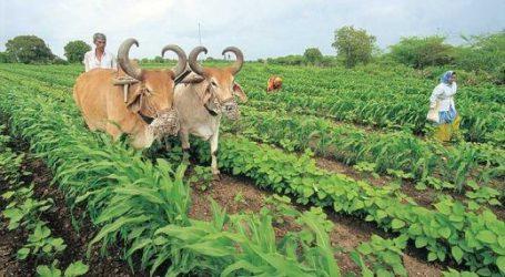 મોદી સાહેબ ખેડૂતોના 2,829 કરોડ રૂપિયા વીમા કંપનીઓ ચૂકવતી નથી! તમારી બોલતી કેમ છે બંધ