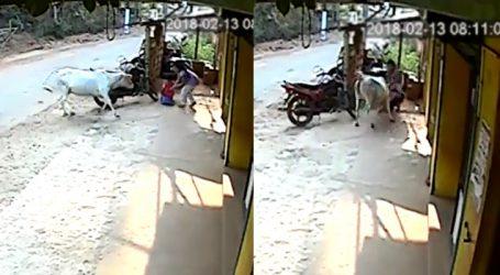 નાના ભાઇને બચાવવા ગાયના હુમલા સામે લડી 8 વર્ષની બાળકી, VIDEOમાં કેદથી બહાદુરી