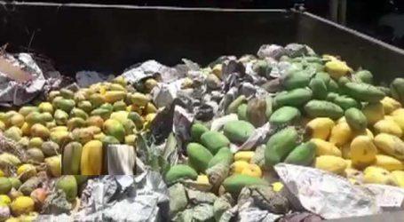 ભરૂચ એપીએમસી સહિતના સ્થળો પર કેરીઓના વેપારીઓને ત્યાં દરોડા