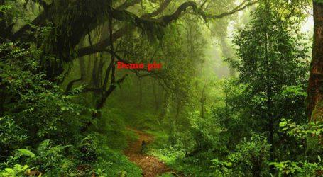 ગુજરાતમાં પણ સાડા પાંચ કરોડ વર્ષ પહેલાં એમેઝોન જેવાં હતાં વર્ષા-જંગલો : સંશોધન