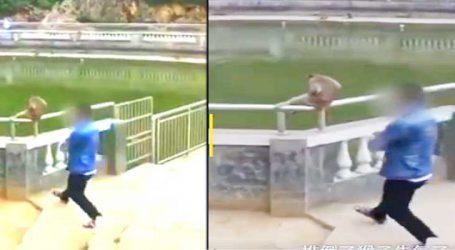 Viral Video : વાનર સાથે મજાક કરવી પડી ભારે, ઉભી પૂંછડીએ ભાગ્યો યુવક