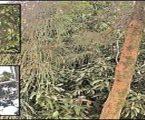 OMG: ફળોના રાજા 'કેરી' પર પણ સજ્જ છે તીસરી આંખ
