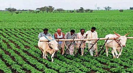 આ રીતે ખેડૂતોની આવક ડબલ કરી શકે છે સરકાર