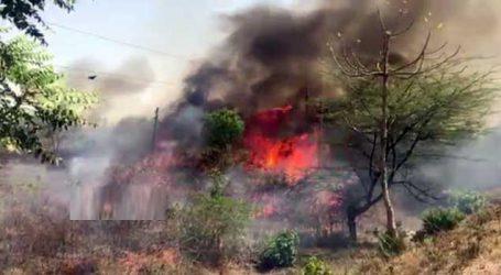 ગૌચરમાં ભિષણ આગ ફાટી નિકળતા નાસભાગ, અનેક પંખીના માળા હોમાયા
