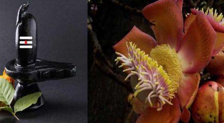 નાગકેસરનું ફૂલ શિવલિંગ પર ચઢાવવાથી થશે નાણાં લાભ