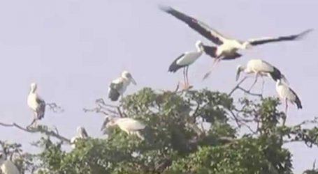 ભરૂચ: ગેલાણી કુવા વિસ્તારમાં રાષ્ટ્રીય તેમજ વિદેશી પક્ષીઓના આગમન