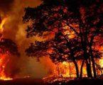 વૈષ્ણોદેવી અને ઉત્તરાખંડના જંગલોમાં લાગેલી આગના કારણે યાત્રા પર સંકટ