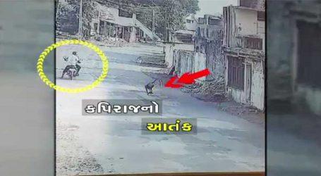નવસારી: સુપા-કરેલ ગામે તોફાની કપિરાજના આતંકથી લોકોમાં ફફડાટ