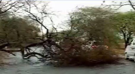 ભાવનગર, અમરેલી પંથકમાં મેઘરાજાની વાજતે ગાજતે પધરામણી,  નાવલી નદીમાં પૂર