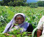 ગુજરાતના ખેડૂતો માટે અાનંદના સમાચાર :  523 કરોડ રૂપિયા સોમવારથી ચૂકવવાના શરૂ થશે