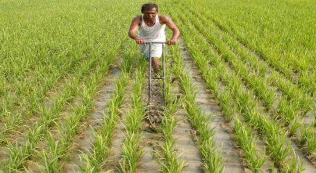 ગુજરાતની ખરીફ ખેતીને બચાવવા માટે કૃષિ વિભાગની અાવી સોનેરી ટિપ્સ
