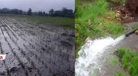 વેરાવળ તાલુકામાં ખેડૂતોની માગણીઃ 'નિષ્ફળ પાકના નુકસાનનું વળતર આપે સરકાર'