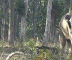 અહીંના મંત્રીએ જંગલી હાથીઓને શાંત કરવા અપનાવ્યો અનોખો ઉપાય