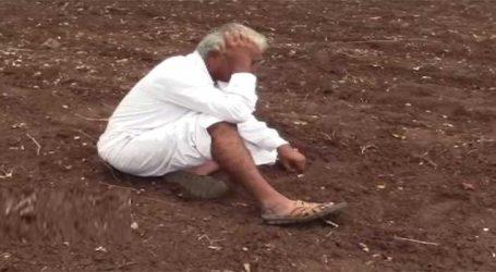પાટણમાં ખેડૂતોની ચિંતા દિવસે દિવસે વધી રહી છે કારણ છે આ..