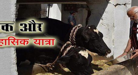 મોદીના હવે પછીના વિદેશ પ્રવાસે સાથે મંત્રીઓ નહીં પણ જશે 200 ગાયો