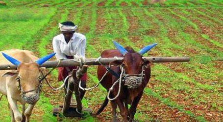 પાકવીમા માટે કેન્દ્ર સરકારે લીધો મોટો નિર્ણય : ખેડૂતો થશે રાજીના રેડ