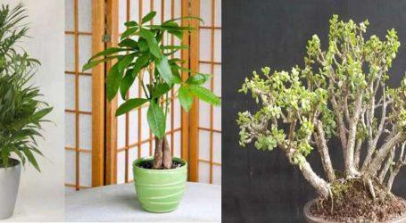 વાસ્તુટિપ્સ : ઘરમાં લગાવો આ છોડ, ચમકી ઉઠશે કિસ્મત