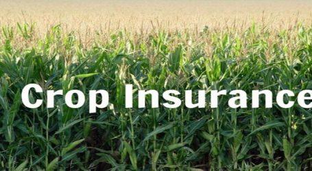 ગુજરાતમાં પાકવીમાની પારાયણ, સરકારનું ઉપજતું નથી અને ખેડૂતો થાક્યા