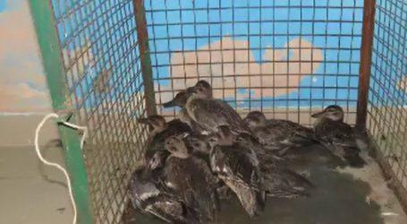 અમદાવાદ : નળસરોવરમાં પક્ષીઓના શિકારનું વધુ એક કૌભાંડ સામે આવ્યું