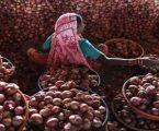 50 પૈસા કિલો ડુંગળીનો ભાવ સાંભળી ખેડૂતે લાગ્યો ધ્રાસકો, ઘરખરી લેવાના અરમાનો તૂટી ગયા