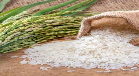 ડાંગરના ખેડૂતો માટે સરકારની મોટી જાહેરાત, 20 જિલ્લામાં થાય છે વાવણી
