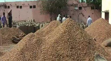 50 ખેડૂતોને મગફળી લઇ બોલાવાય છે, પણ આવે છે માત્ર 25થી 30