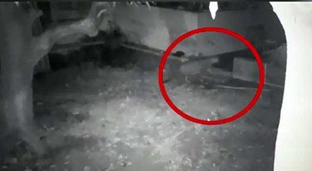 બે દિવસથી ગાયબ કૂતરાના CCTV ચેક કરતા ચોંકી ગયા પરિવારજનો