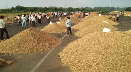 મગફળીમાં ચાલી રહેલા ધાંધિયા સામે કોંગ્રેસે ખેડૂતો માટે આંદોલનનું રણશીંગુ ફૂંક્યુ