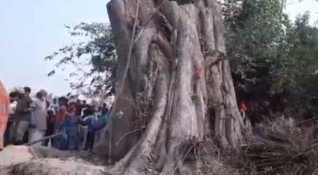 પોતાની મેળે જ કેમ ઉભું થઇ ગયું આ પીપળાનું ઝાડ ?