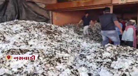નસવાડીમાં 700 મણ કપાસ બળીને ખાખ, કારણ બન્યું આ નાનકડી ભૂલ