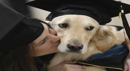 એક કૂતરાનું ડિપ્લોમા ડિગ્રીથી સન્માન કરાયું, જાણો કેમ?