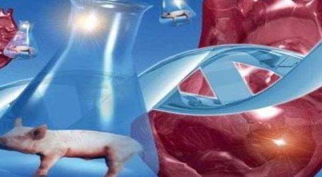 વિજ્ઞાનનો ચમત્કાર : હવે મનુષ્યના શરીરમાં ધડકશે પશુનું હૃદય, જાણો કેવીરીતે