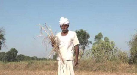 ગઈકાલના બજેટમાં ગુજરાતના કેટલા ખેડૂતોને લાભ મળશે ? ક્લિક કરી જાણી લો