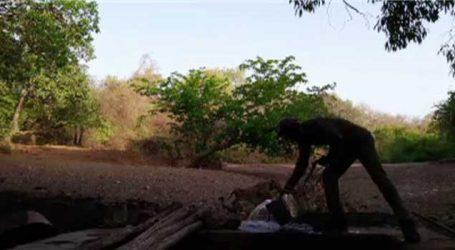 VIDEO: ગીરમાં બાળ સિંહોની પાસે પહોંચી આ વનકર્મીએ પાણી પીવડાવ્યું
