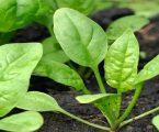 3 મહિનામાં જ રૂપિયા 3 લાખની થશે કમાણી, શિયાળામાં આ કરો ખેતી