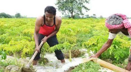 હવે દેશી દારૂ ખાલી નશો કરવા પૂરતો જ સિમિત નથી રહ્યો, ખેડૂતોએ સરકારને પણ નવો રસ્તો ચીંધ્યો