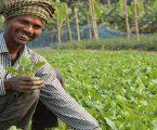મોદી સરકારનું લોકસભા પહેલાનું બજેટ ખેડૂતલક્ષી હશે, આ યોજનામાં સરકાર ફાળવશે જંગી રૂપિયા
