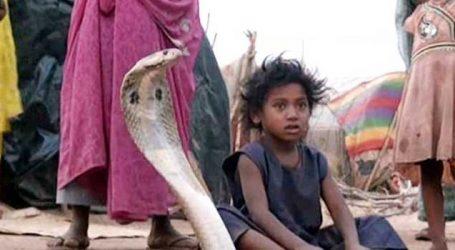 વિચિત્ર પરંપરા! અહીં દહેજમાં આપવા પડે છે 21 ઝેરી સાંપ, નહી તો છોકરી રહે છે કુંવારી